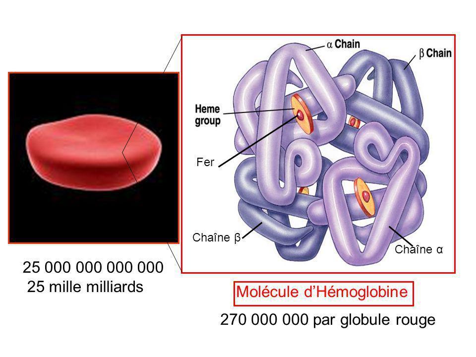 Globule Rouge Molécule dHémoglobine 25 000 000 000 000 25 mille milliards 270 000 000 par globule rouge Fer Chaîne β Chaîne α