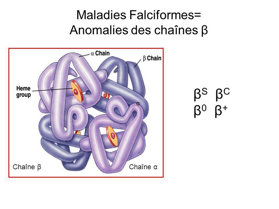 Chaîne β Chaîne α α β S β C β 0 β + Maladies Falciformes= Anomalies des chaînes β