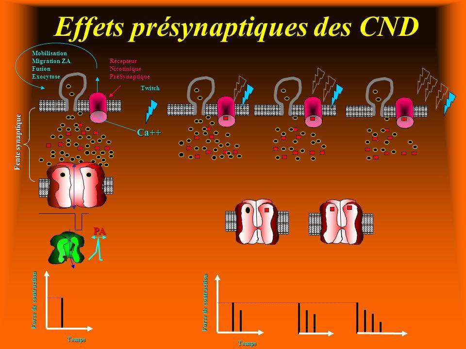 Effets présynaptiques des CND Ca++ Fente synaptique Mobilisation Migration ZA FusionExocytose Temps PA Force de contraction Temps Twitch RécepteurNicotiniquePréSynaptique
