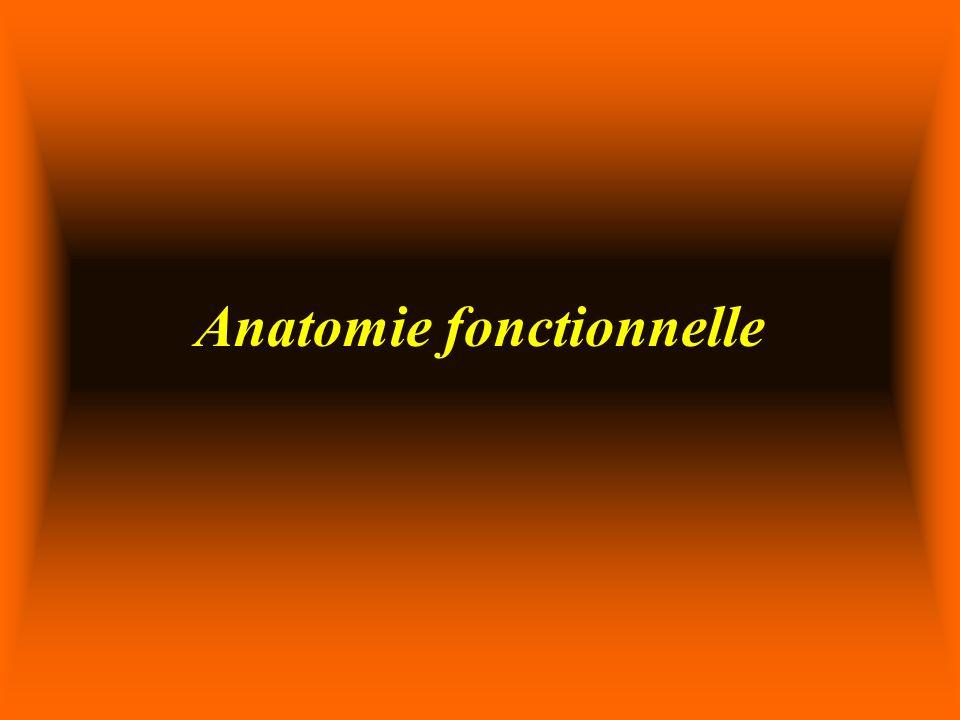 AChE Enzyme le plus puissant de lorganismeEnzyme le plus puissant de lorganisme Activité AChE permet de moduler lactivité musculaireActivité AChE permet de moduler lactivité musculaire La concentration en AChE varie dun groupe musculaire à lautreLa concentration en AChE varie dun groupe musculaire à lautre Chaque AChE possède 6 sites dhydrolyse de AChChaque AChE possède 6 sites dhydrolyse de ACh 1 JNM: Sommes des sites AChE = AChR1 JNM: Sommes des sites AChE = AChR Hydrolyse environ 50% des AChHydrolyse environ 50% des ACh 2000000->1 000 000 disponible pour AChR2000000->1 000 000 disponible pour AChR