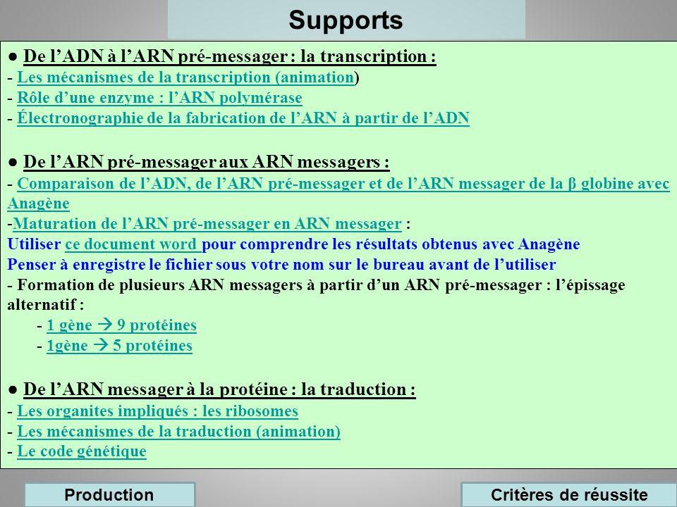 Supports De lADN à lARN pré-messager : la transcription : - Les mécanismes de la transcription (animation)Les mécanismes de la transcription (animatio