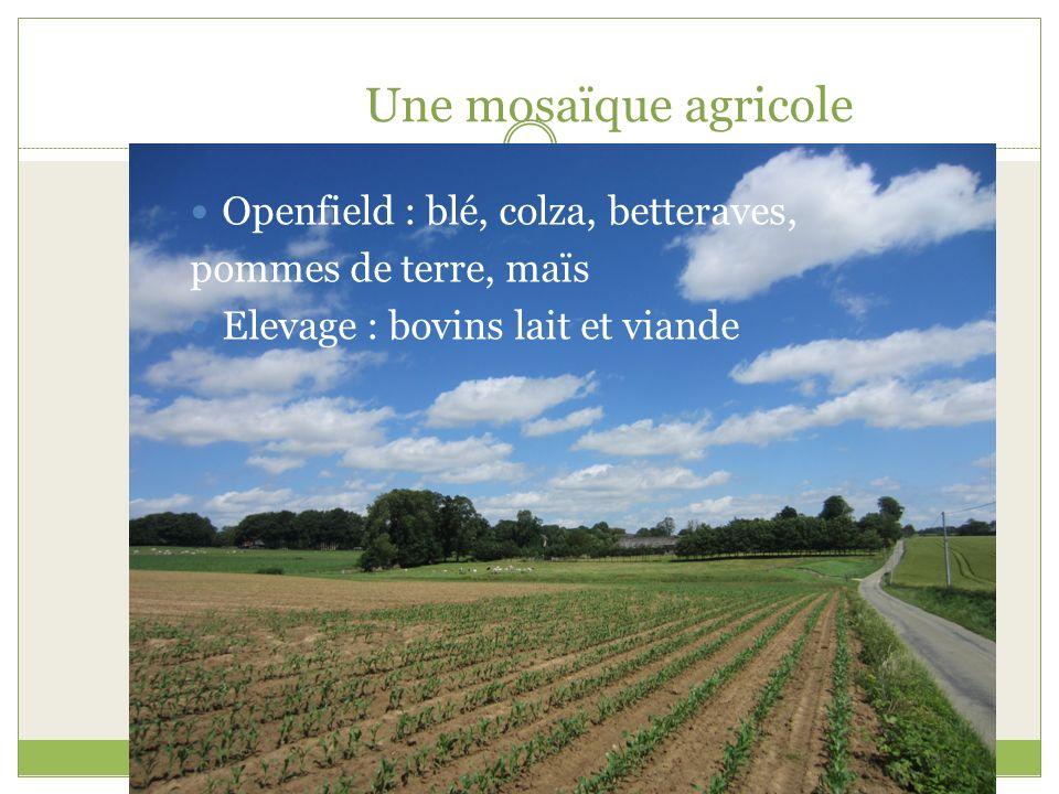 Une mosaïque agricole Openfield : blé, colza, betteraves, pommes de terre, maïs Elevage : bovins lait et viande