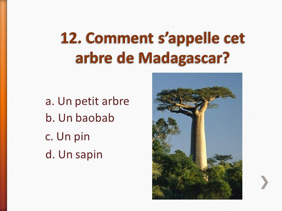 a. Un petit arbre b. Un baobab c. Un pin d. Un sapin