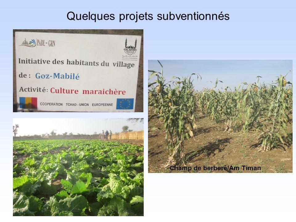 Quelques projets subventionnés Champ de berberé/Am Timan