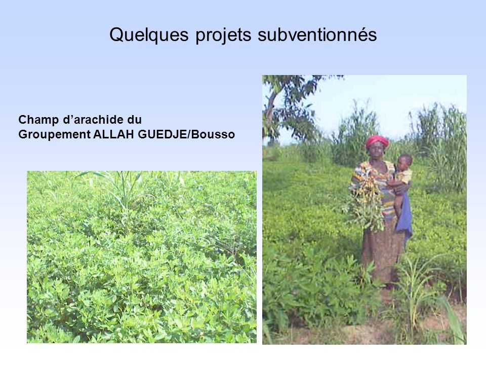 Quelques projets subventionnés Champ darachide du Groupement ALLAH GUEDJE/Bousso