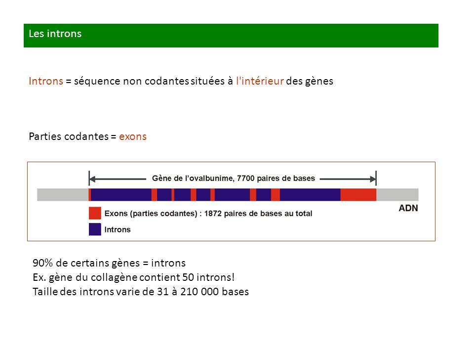 Les introns Introns = séquence non codantes situées à l'intérieur des gènes Parties codantes = exons 90% de certains gènes = introns Ex. gène du colla