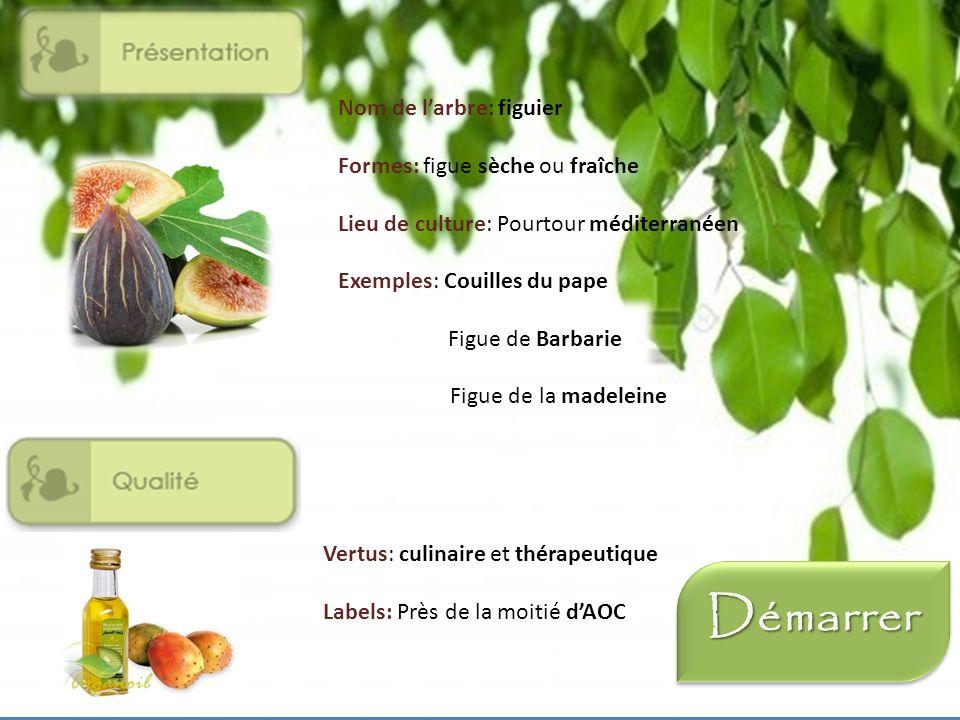 Question 3 : Quel est le premier producteur de figues dans le monde ? LEgypte La Grèce La Turquie