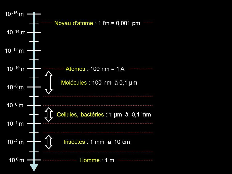 Atomes : 100 nm = 1 A 10 -16 m 10 -14 m 10 -12 m 10 -10 m 10 -8 m 10 -6 m 10 -4 m 10 -2 m 10 0 m Noyau datome : 1 fm = 0,001 pm Molécules : 100 nm à 0,1 µm Cellules, bactéries : 1 µm à 0,1 mm Insectes : 1 mm àà10 cm Homme : 1 m