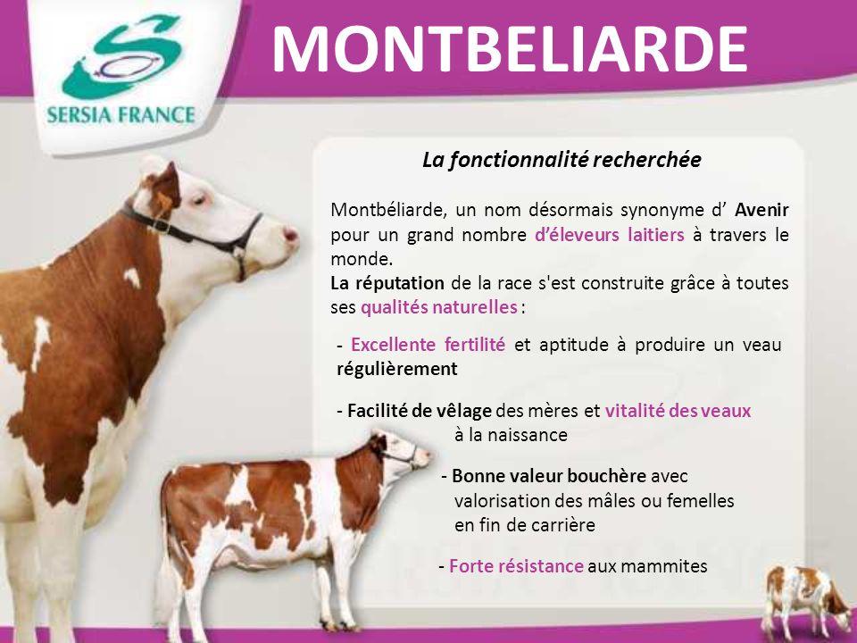 MONTBELIARDE La fonctionnalité recherchée Montbéliarde, un nom désormais synonyme d Avenir pour un grand nombre déleveurs laitiers à travers le monde.