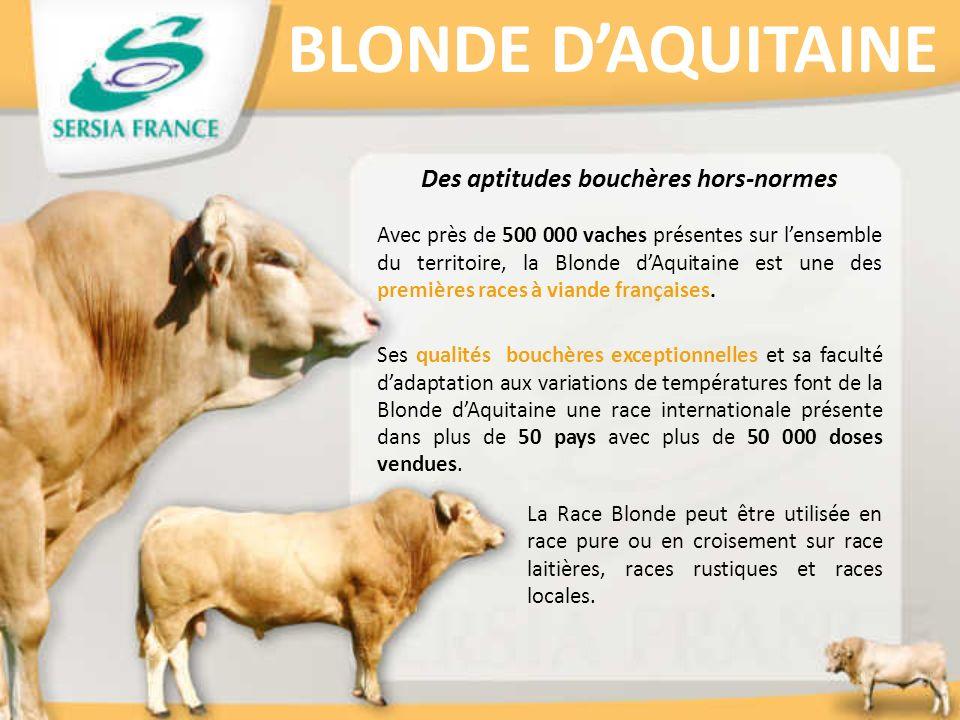 BLONDE DAQUITAINE Des aptitudes bouchères hors-normes Avec près de 500 000 vaches présentes sur lensemble du territoire, la Blonde dAquitaine est une