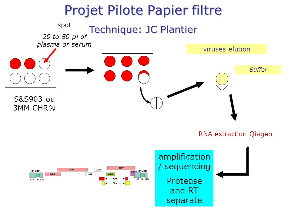 Projet Pilote Papier filtre Technique: JC Plantier amplification / sequencing Protease and RT separate Buffer viruses elution RNA extraction Qiagen spot 20 to 50 µl of plasma or serum S&S903 ou 3MM CHR®