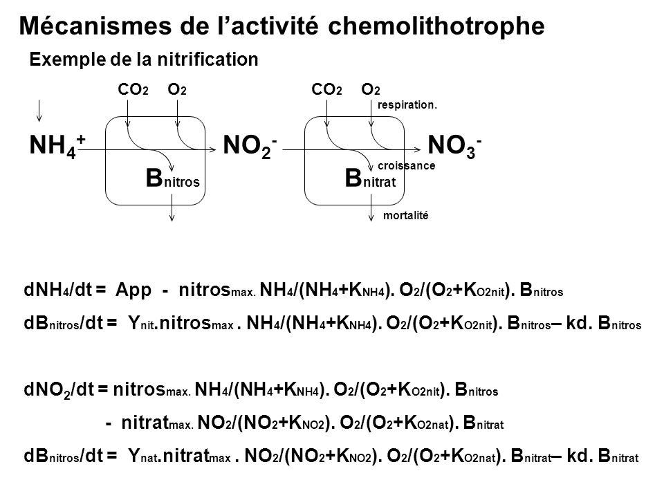 Mécanismes de lactivité chemolithotrophe Exemple de la nitrification NH 4 + B nitros CO 2 mortalité respiration. croissance NO 2 - B nitrat CO 2 NO 3