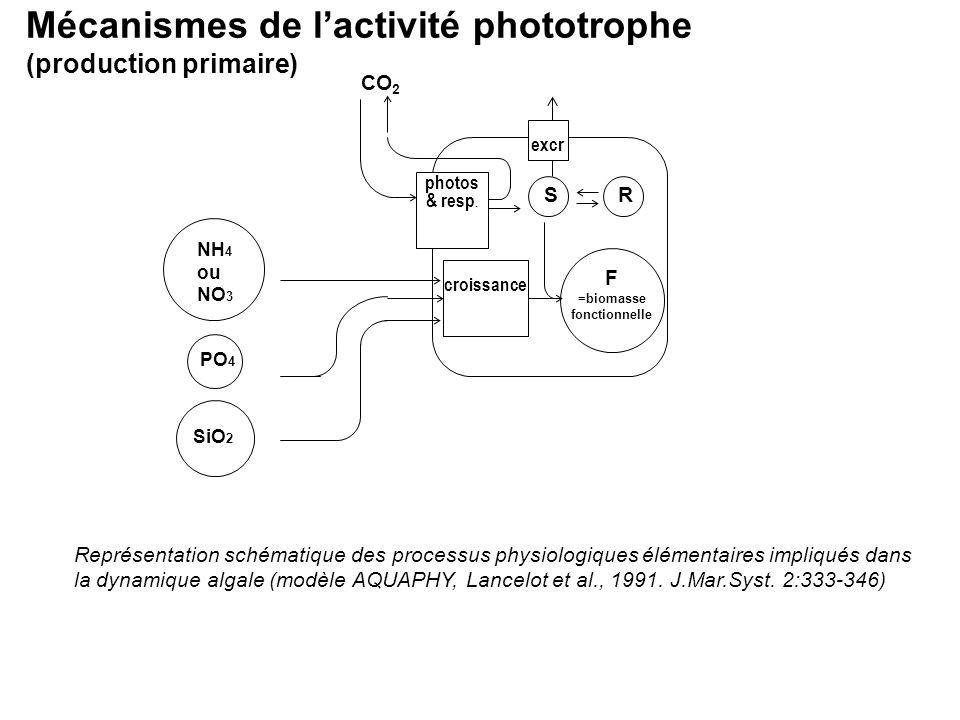 Mécanismes de lactivité phototrophe (production primaire) Représentation schématique des processus physiologiques élémentaires impliqués dans la dynam