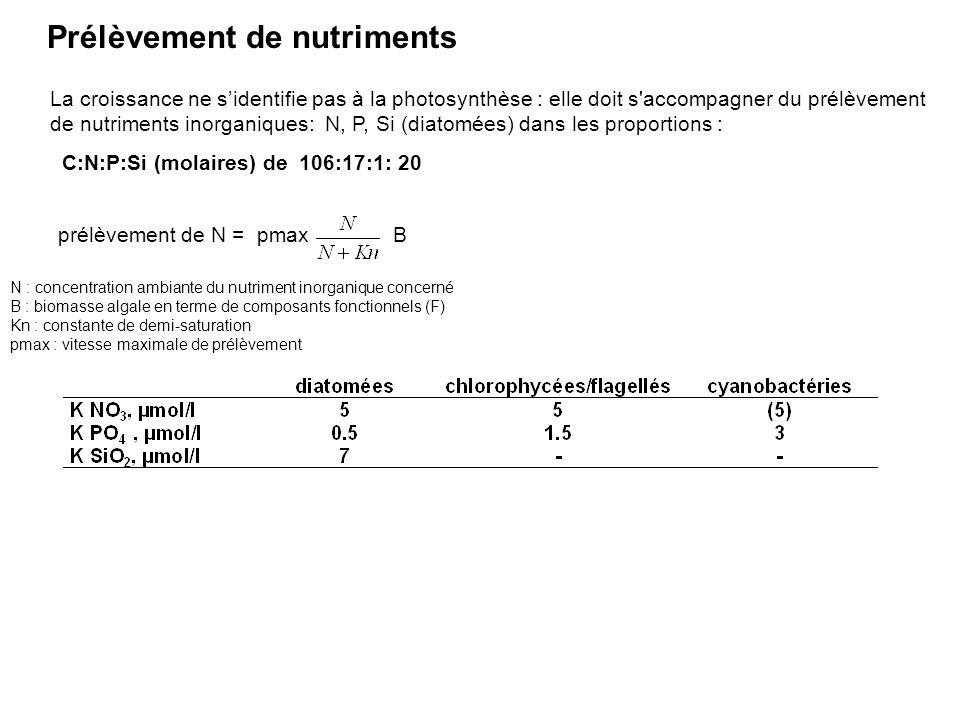 Prélèvement de nutriments La croissance ne sidentifie pas à la photosynthèse : elle doit s'accompagner du prélèvement de nutriments inorganiques: N, P