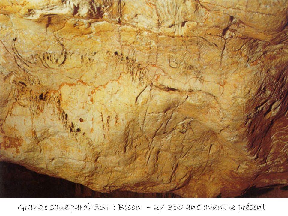 Cheval noir réduit au protomé ; zone est de la grande salle : 18 500 ans avant le présent Ce cheval a été peint à 1,20m du sol, sur une surface molle.