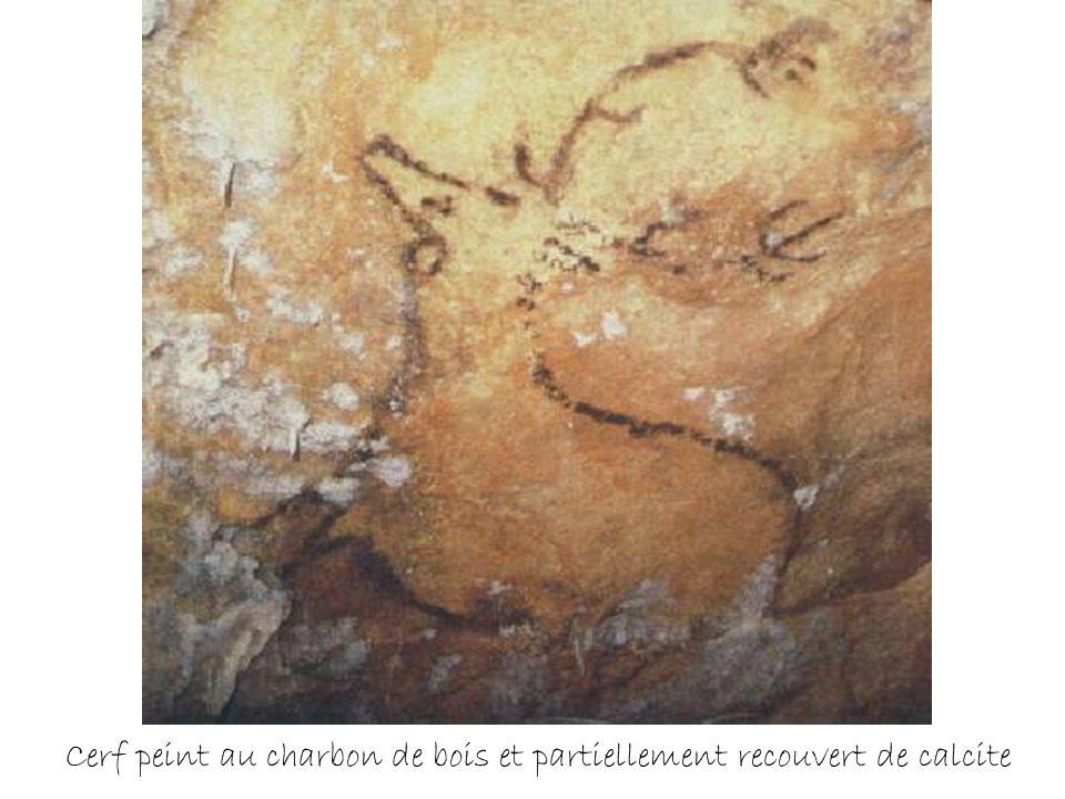 Cerf peint en noir sur un plafond bas, salle basse de la zone ouest 18 500 ans avant le présent