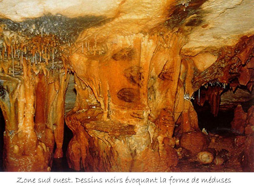 Pingouins ; 27 et 26 cm ( 18 500 ans avant le présent) Ils sont peints sur une voûte à 1,80m du sol.