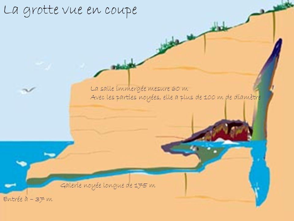 Entrée à – 37 m Galerie noyée longue de 175 m La salle immergée mesure 60 m Avec les parties noyées, elle a plus de 100 m de diamètre La grotte vue en coupe