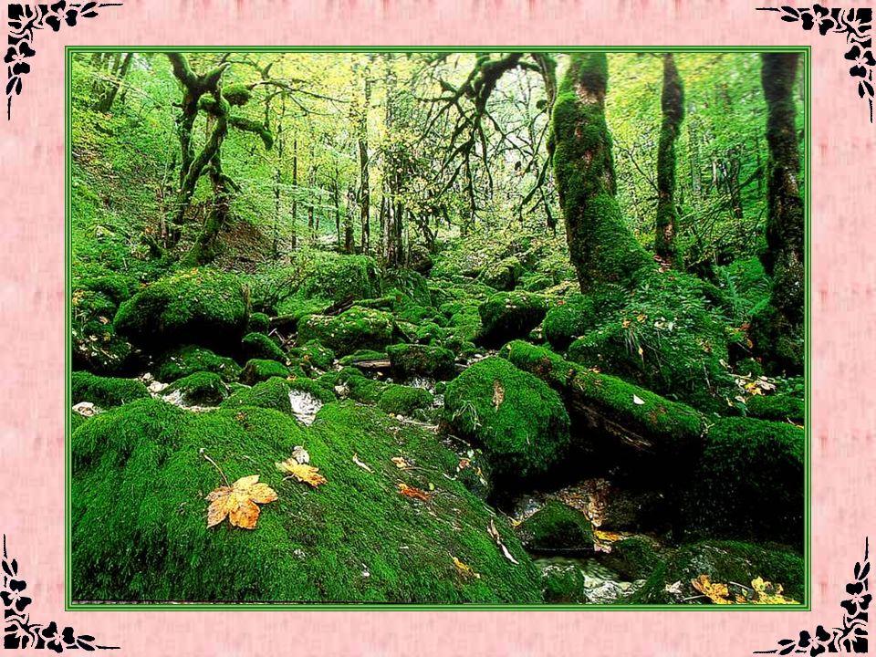 Le Cirque de Consolation (Doubs – 25) Une atmosphère de forêt humide tropicale règle dans le Cirque de Consolation, près de Montbéliard. Ses éboulis d