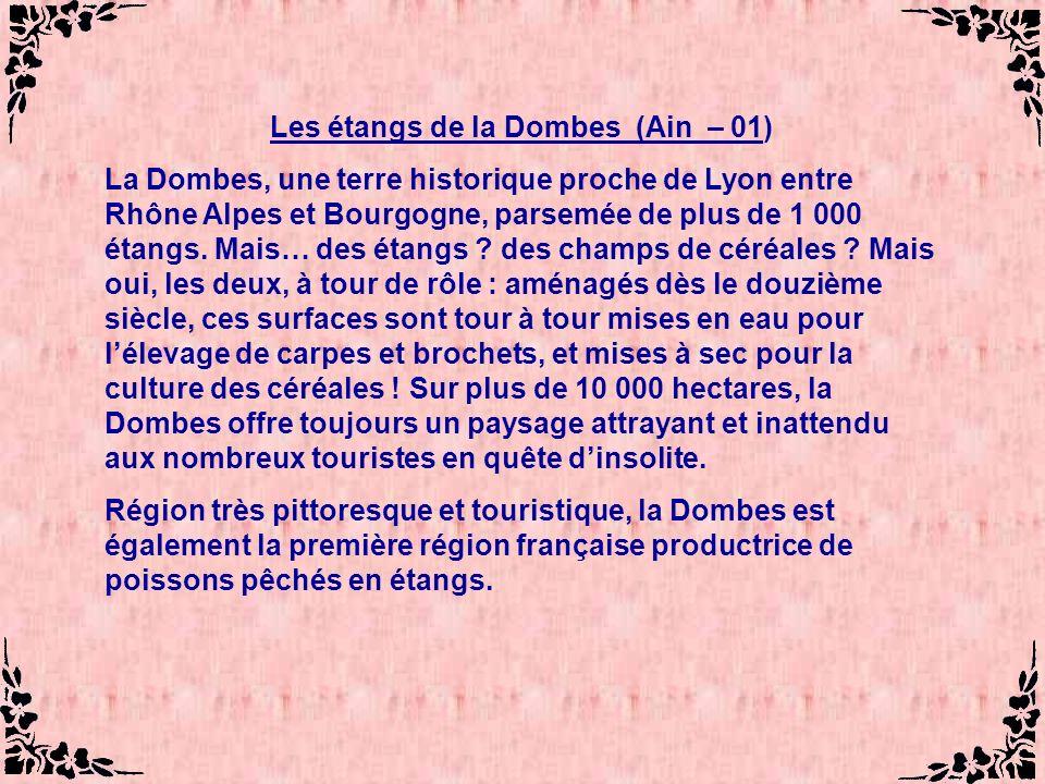 Les étangs de la Dombes (Ain – 01) La Dombes, une terre historique proche de Lyon entre Rhône Alpes et Bourgogne, parsemée de plus de 1 000 étangs.