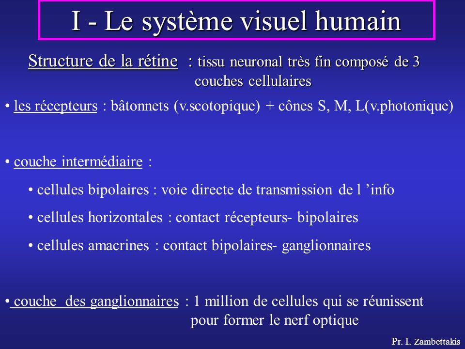 I - Le système visuel humain Structure de la rétine : tissu neuronal très fin composé de 3 couches cellulaires les récepteurs : bâtonnets (v.scotopiqu