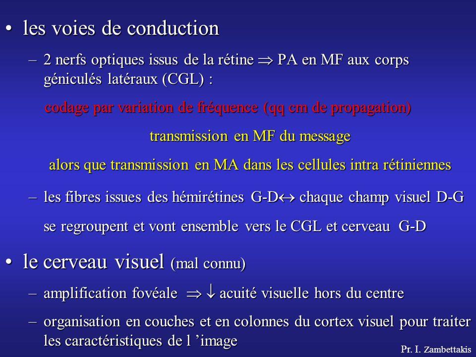 Pr. I. Zambettakis les voies de conductionles voies de conduction –2 nerfs optiques issus de la rétine PA en MF aux corps géniculés latéraux (CGL) : c