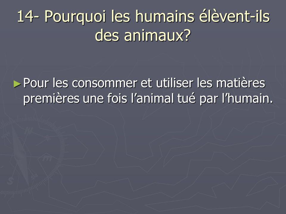 14- Pourquoi les humains élèvent-ils des animaux? Pour les consommer et utiliser les matières premières une fois lanimal tué par lhumain. Pour les con