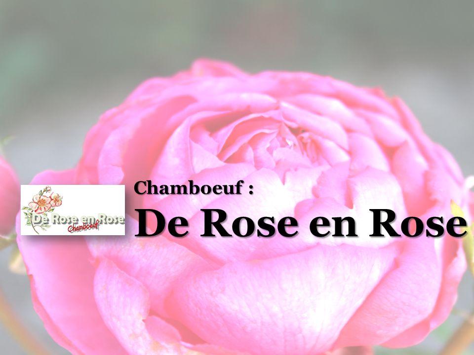 Chamboeuf : De Rose en Rose