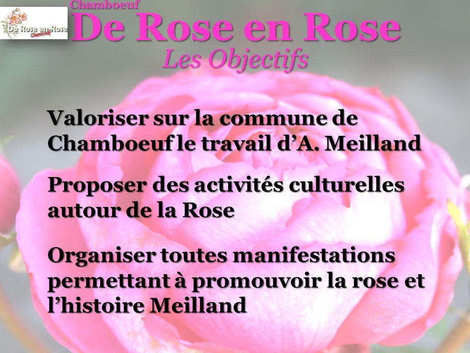 Vente de Rosiers Meilland dédié aux Chambutaires (+ de 1000 Rosiers) De Rose en Rose Chamboeuf Les Actions Menées Visite des pépinières Meilland par les Adhérents