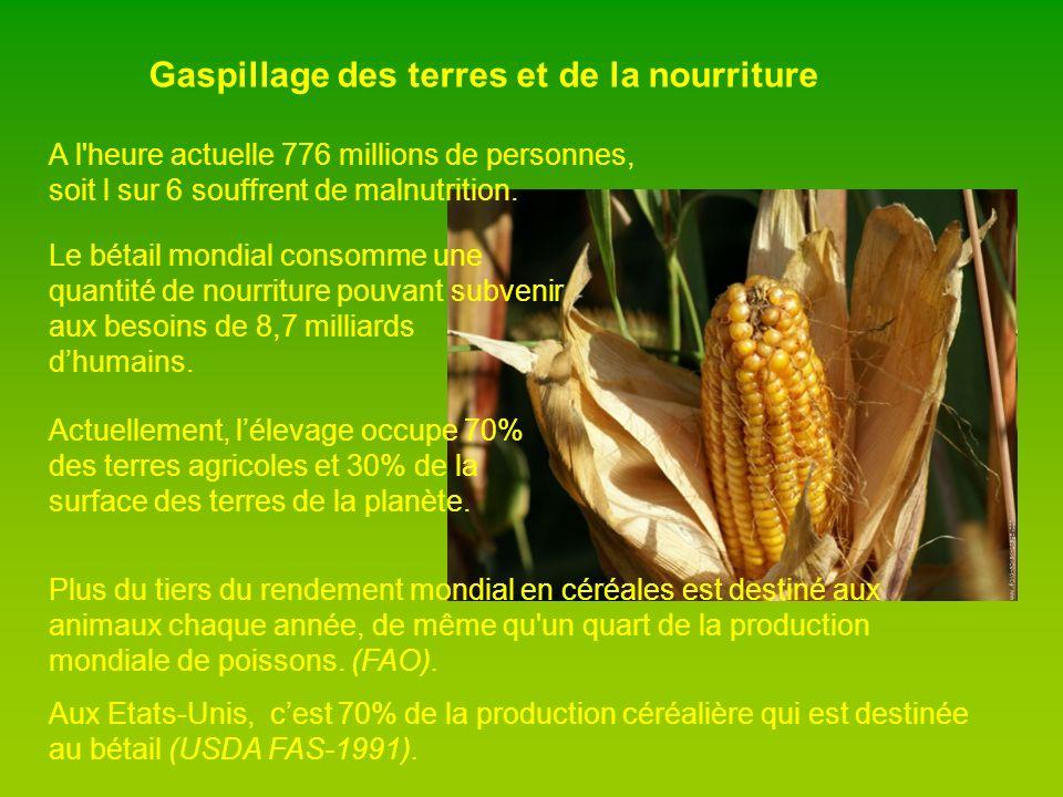 Gaspillage des terres et de la nourriture A l heure actuelle 776 millions de personnes, soit l sur 6 souffrent de malnutrition.
