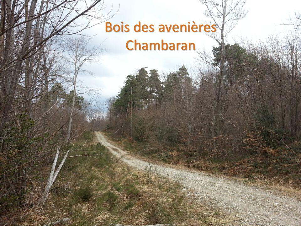 ENVIRONNEMENT LA FORET 10 Bois des avenières Chambaran Chambaran