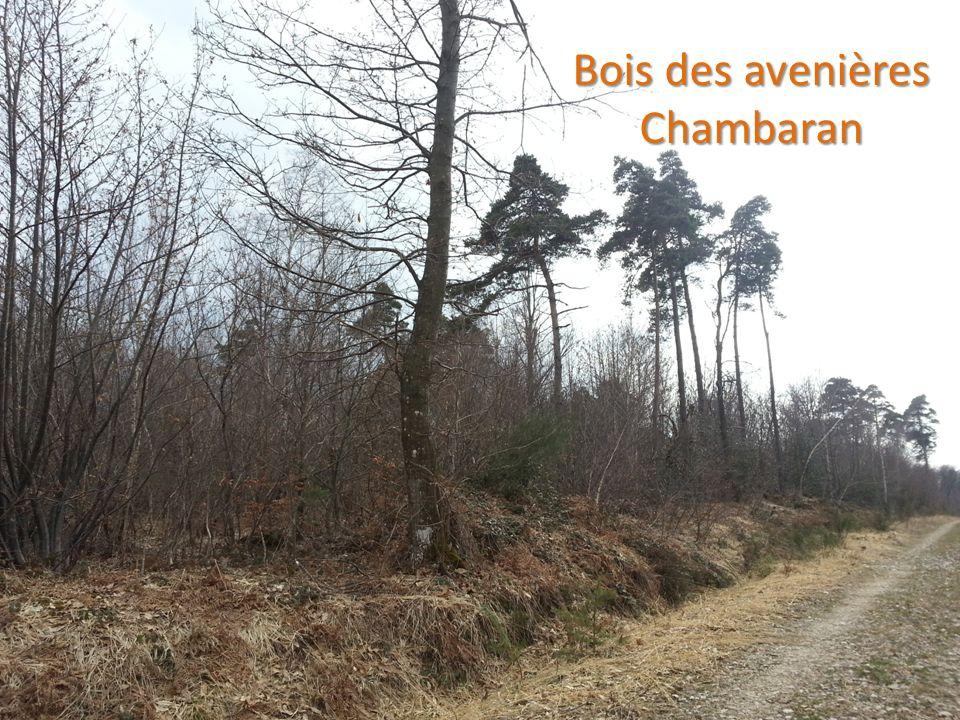 ENVIRONNEMENT LA FORET 11 Bois des avenières Chambaran Chambaran
