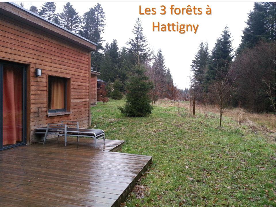 ENVIRONNEMENT LA FORET 12 Les 3 forêts à Hattigny