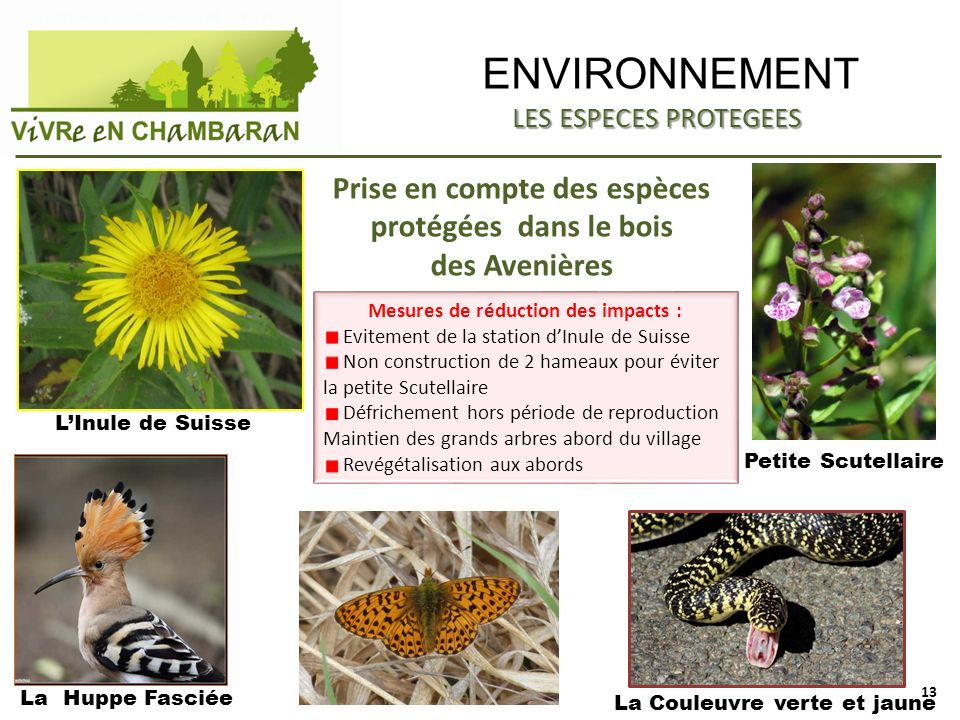 ENVIRONNEMENT Prise en compte des espèces protégées dans le bois des Avenières LInule de Suisse La Couleuvre verte et jaune La Huppe Fasciée LES ESPEC
