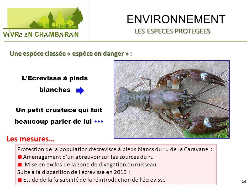 ENVIRONNEMENT Une espèce classée « espèce en danger » : LEcrevisse à pieds blanches LES ESPECES PROTEGEES Un petit crustacé qui fait beaucoup parler d