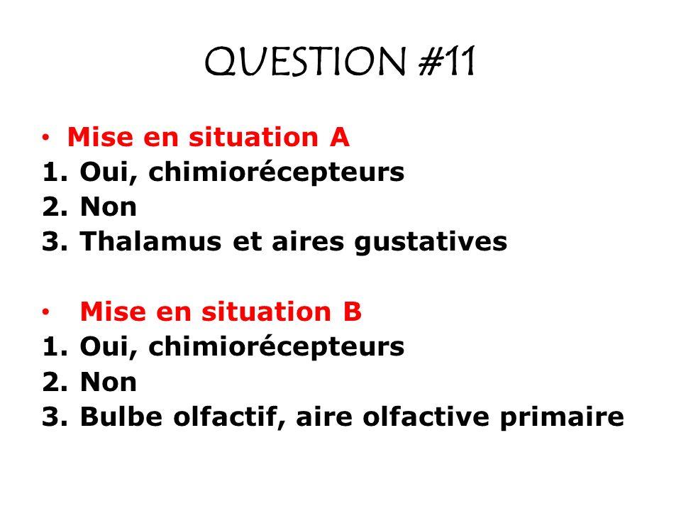 QUESTION #11 Mise en situation A 1.Oui, chimiorécepteurs 2.Non 3.Thalamus et aires gustatives Mise en situation B 1.Oui, chimiorécepteurs 2.Non 3.Bulbe olfactif, aire olfactive primaire