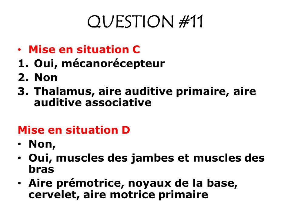QUESTION #11 Mise en situation C 1.Oui, mécanorécepteur 2.Non 3.Thalamus, aire auditive primaire, aire auditive associative Mise en situation D Non, Oui, muscles des jambes et muscles des bras Aire prémotrice, noyaux de la base, cervelet, aire motrice primaire