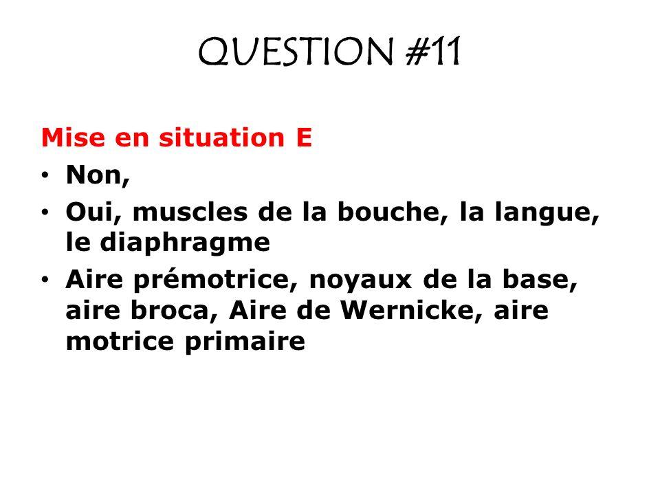 QUESTION #11 Mise en situation E Non, Oui, muscles de la bouche, la langue, le diaphragme Aire prémotrice, noyaux de la base, aire broca, Aire de Wernicke, aire motrice primaire