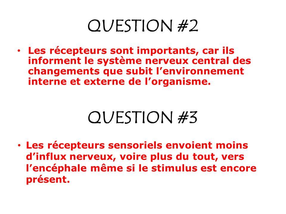 QUESTION #2 Les récepteurs sont importants, car ils informent le système nerveux central des changements que subit lenvironnement interne et externe de lorganisme.