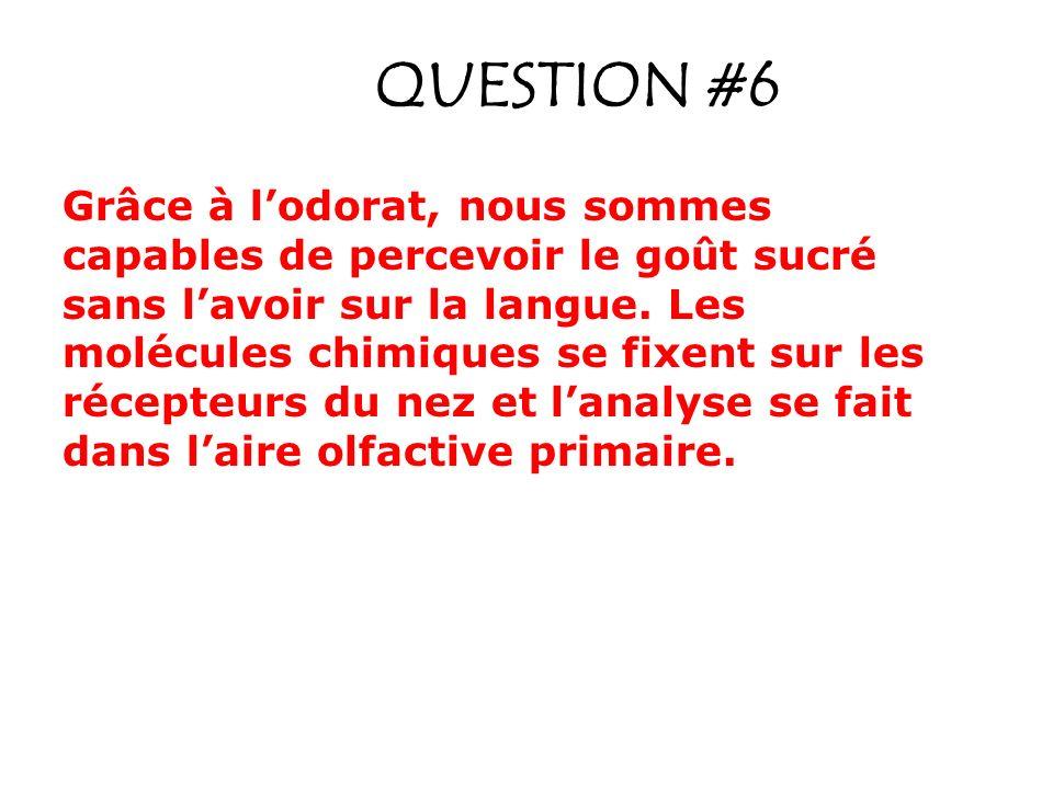QUESTION #6 Grâce à lodorat, nous sommes capables de percevoir le goût sucré sans lavoir sur la langue.