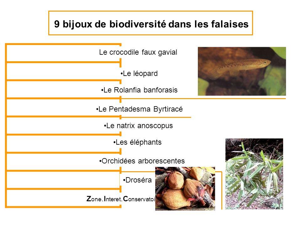 9 bijoux de biodiversité dans les falaises Le crocodile faux gavial Le léopard Le Rolanfia banforasis Le Pentadesma Byrtiracé Z one.I nteret.C onserva