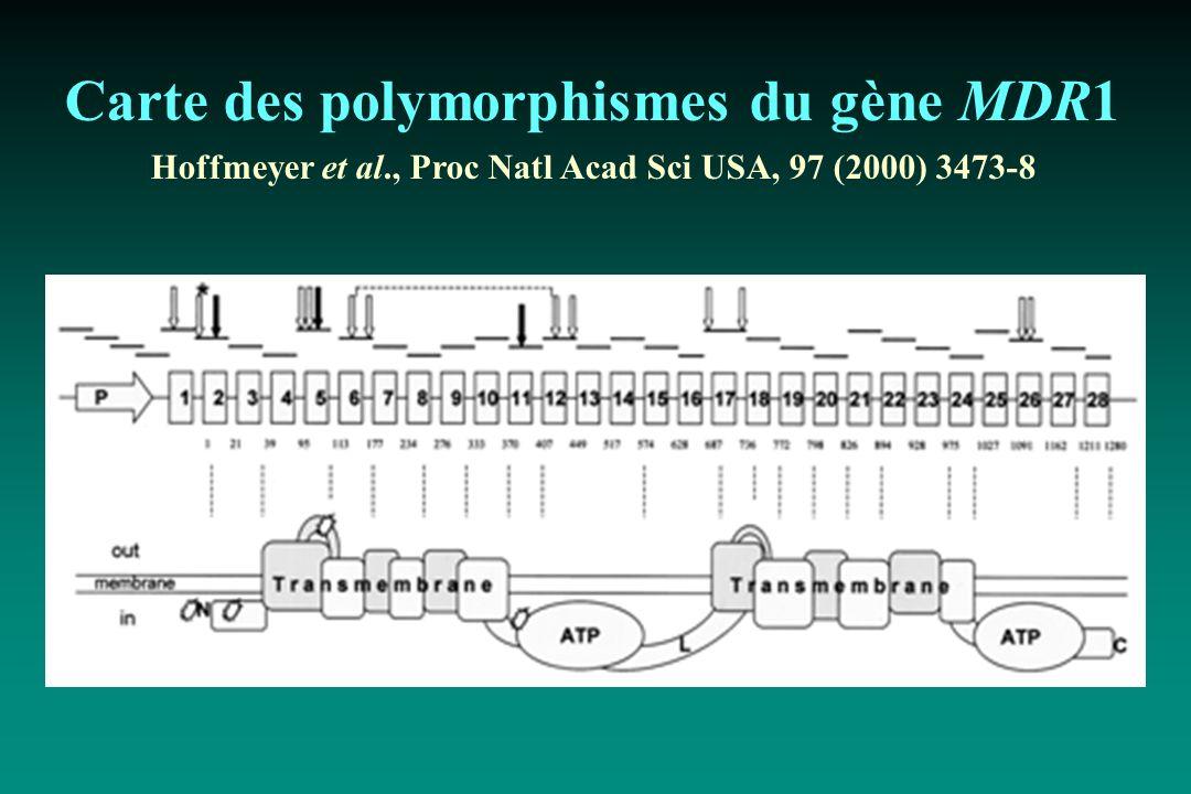 Carte des polymorphismes du gène MDR1 Hoffmeyer et al., Proc Natl Acad Sci USA, 97 (2000) 3473-8