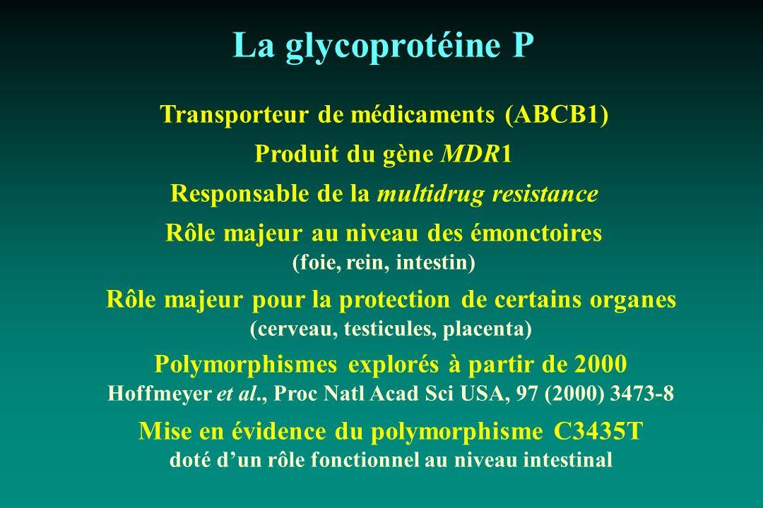 La glycoprotéine P Transporteur de médicaments (ABCB1) Produit du gène MDR1 Responsable de la multidrug resistance Rôle majeur au niveau des émonctoir