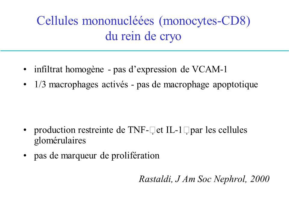 Cellules mononucléées (monocytes-CD8) du rein de cryo infiltrat homogène - pas dexpression de VCAM-1 1/3 macrophages activés - pas de macrophage apopt