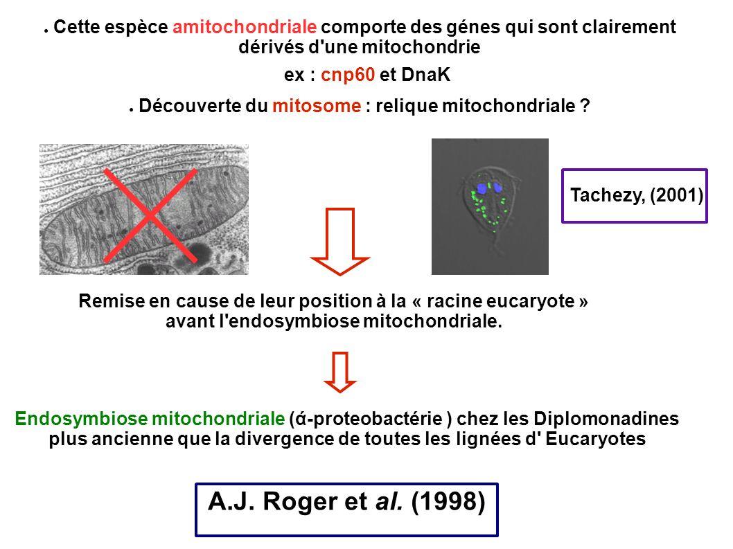 Cette espèce amitochondriale comporte des génes qui sont clairement dérivés d'une mitochondrie ex : cnp60 et DnaK Découverte du mitosome : relique mit