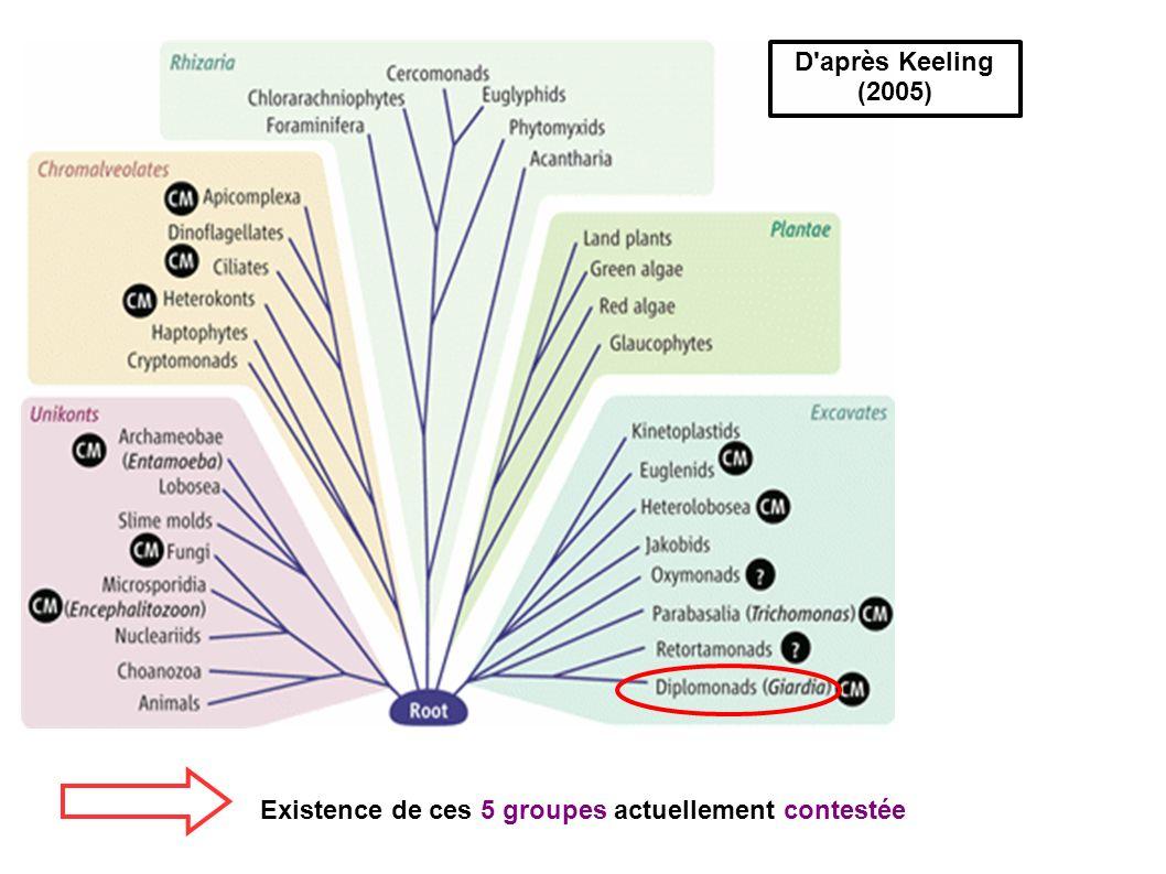 D'après Keeling (2005) Existence de ces 5 groupes actuellement contestée