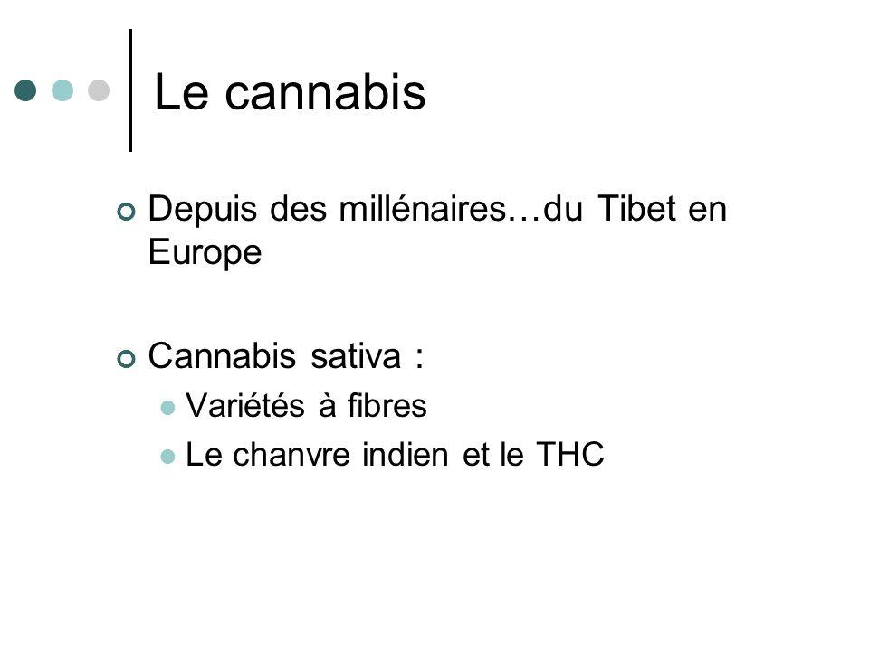 Le cannabis : mode dutilisation Les feuilles séchées : Fumées Le bhang en Inde La résine ou haschich ou shit Lhuile