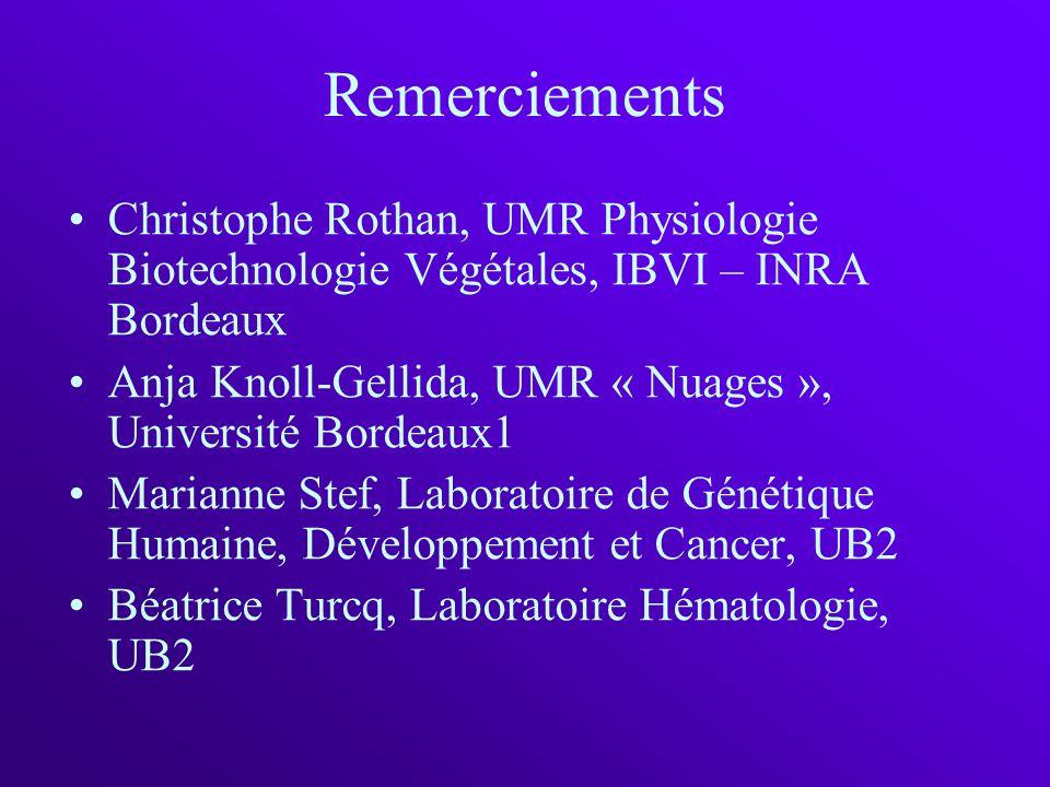 Remerciements Christophe Rothan, UMR Physiologie Biotechnologie Végétales, IBVI – INRA Bordeaux Anja Knoll-Gellida, UMR « Nuages », Université Bordeau