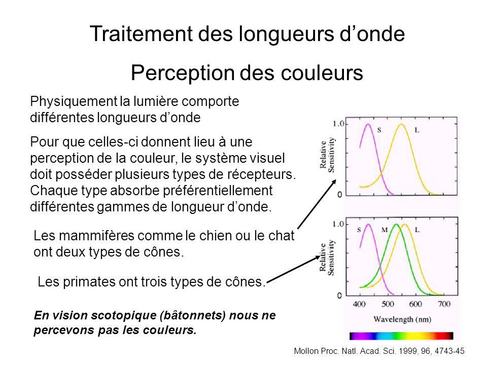 Traitement des longueurs donde Perception des couleurs Physiquement la lumière comporte différentes longueurs donde Pour que celles-ci donnent lieu à une perception de la couleur, le système visuel doit posséder plusieurs types de récepteurs.