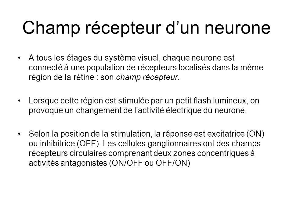 Champ récepteur dun neurone A tous les étages du système visuel, chaque neurone est connecté à une population de récepteurs localisés dans la même région de la rétine : son champ récepteur.